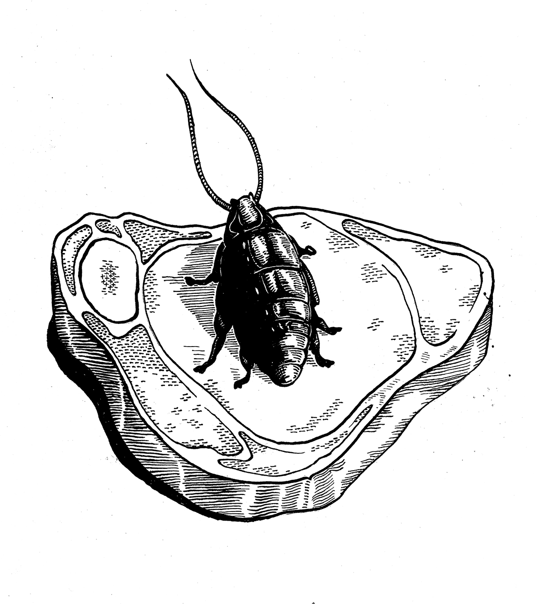A cockroach on a piece of meat
